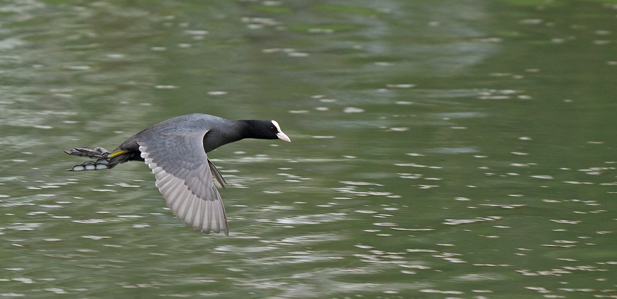 Trafic aérien au-dessus des étangs de Tervuren (photos) 120414041144568519717492