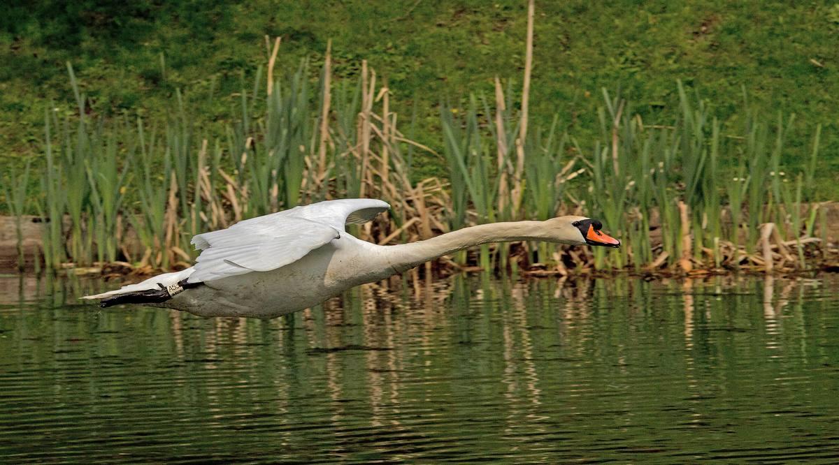 Trafic aérien au-dessus des étangs de Tervuren (photos) 120414041146568519717494