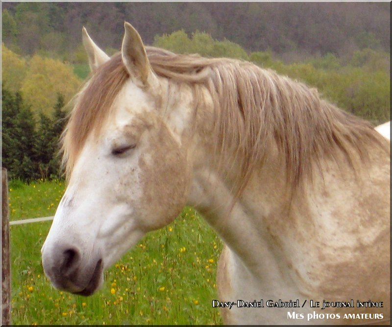 photo cheval rhones alpes savoie france