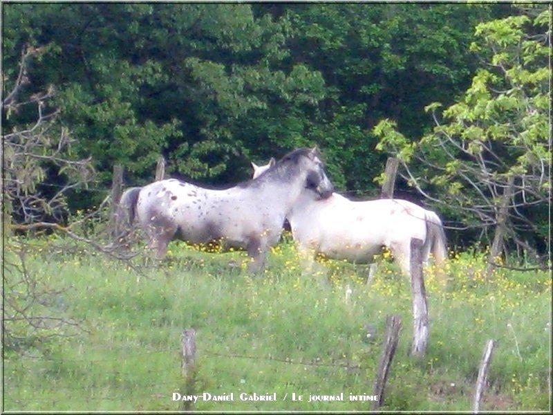 chevaux plaine alpes france savoie photographie