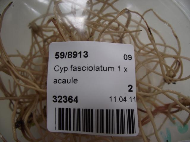 cpripedium 2012 120505011527653989809480