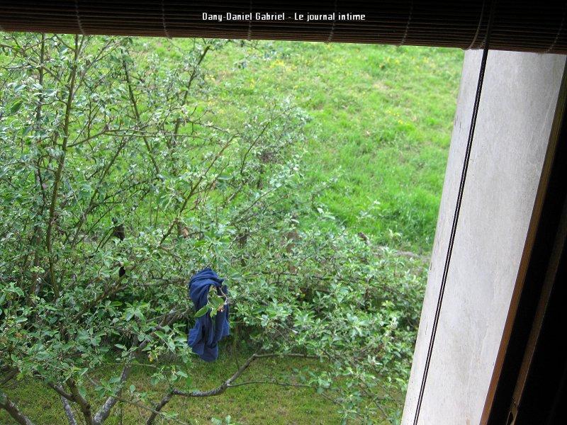 calecon a un arbre