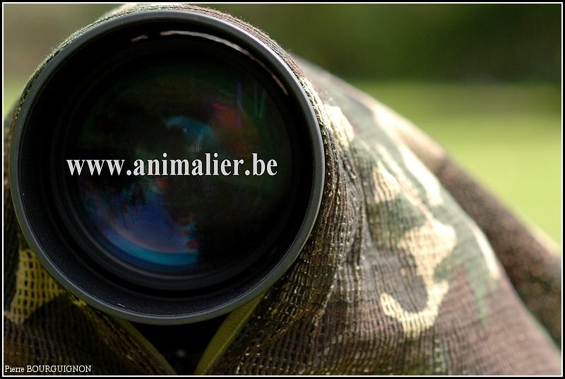 Photographie animalière par Pierre BOURGUIGNON, photographe animalier belge