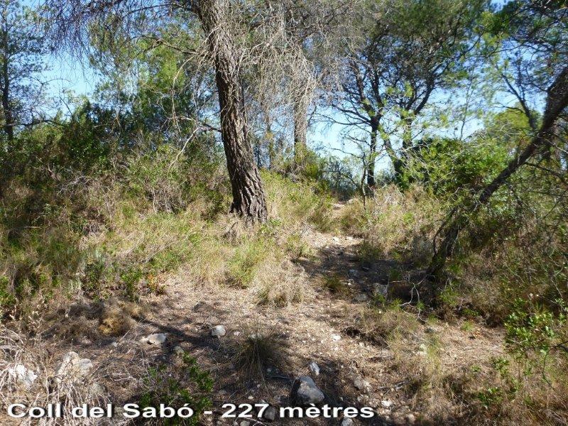 Coll del Sabó - ES-T-227 mètres