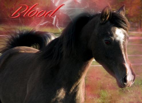 Blood (Deuxième cheval )  12062107274510202810011549