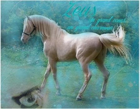 Zeus (troisième cheval.) 12062409140910202810020555