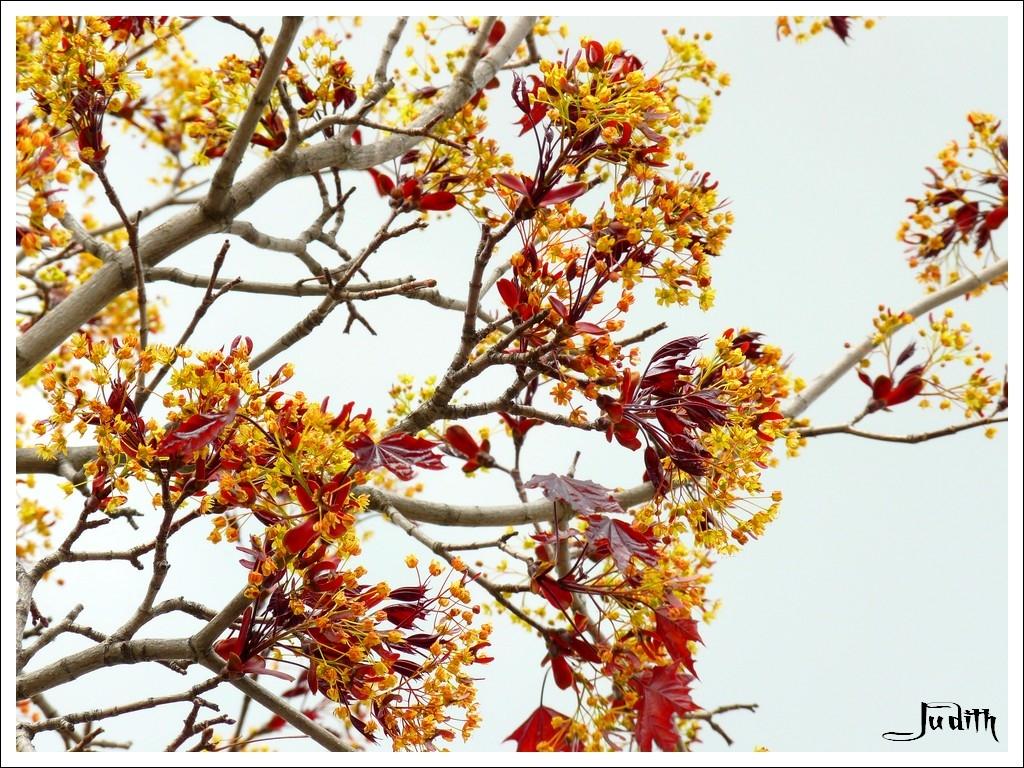 Arbre à feuilles rouges à ID 02