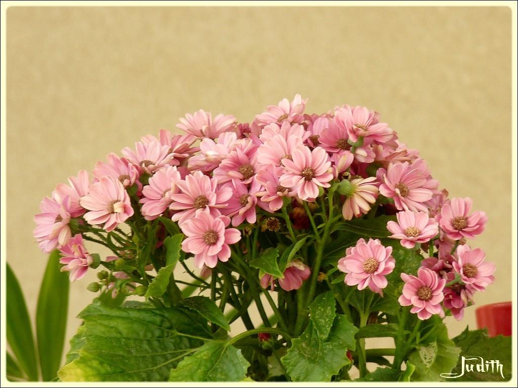 Fleurs de...à ID