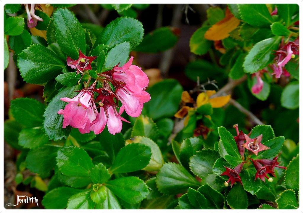 Fleurs roses à ID