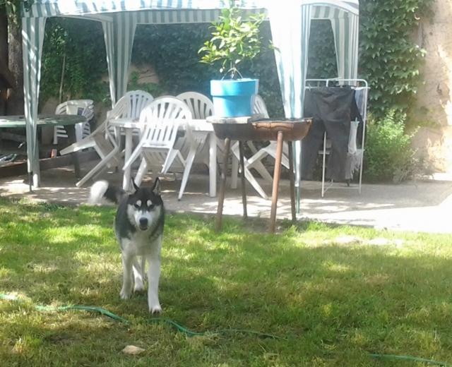 Nos loups grandissent, postez nous vos photos - Page 7 12070105112714914810051378
