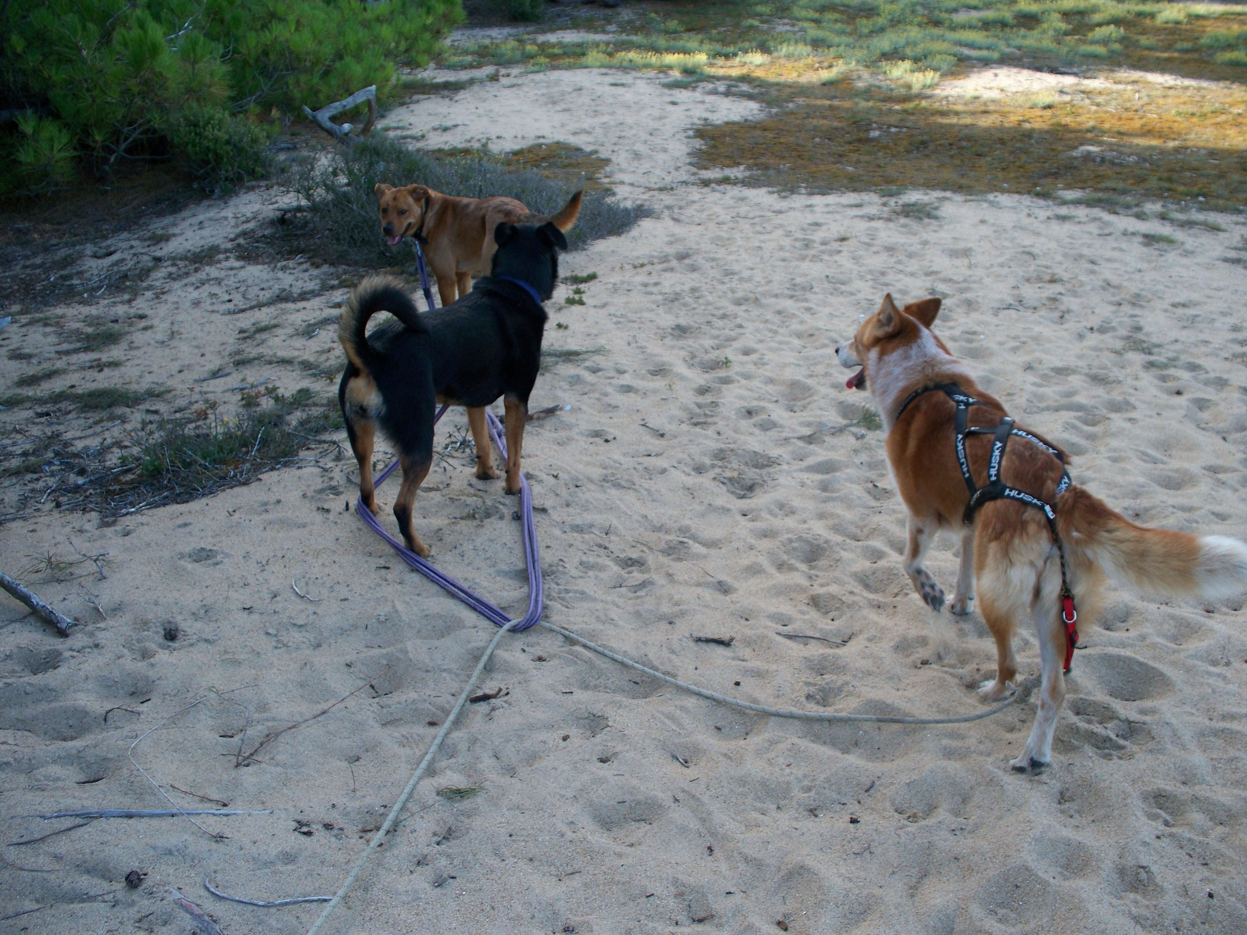 à la découverte de la plage pour Roxy 12080508201815041810180246