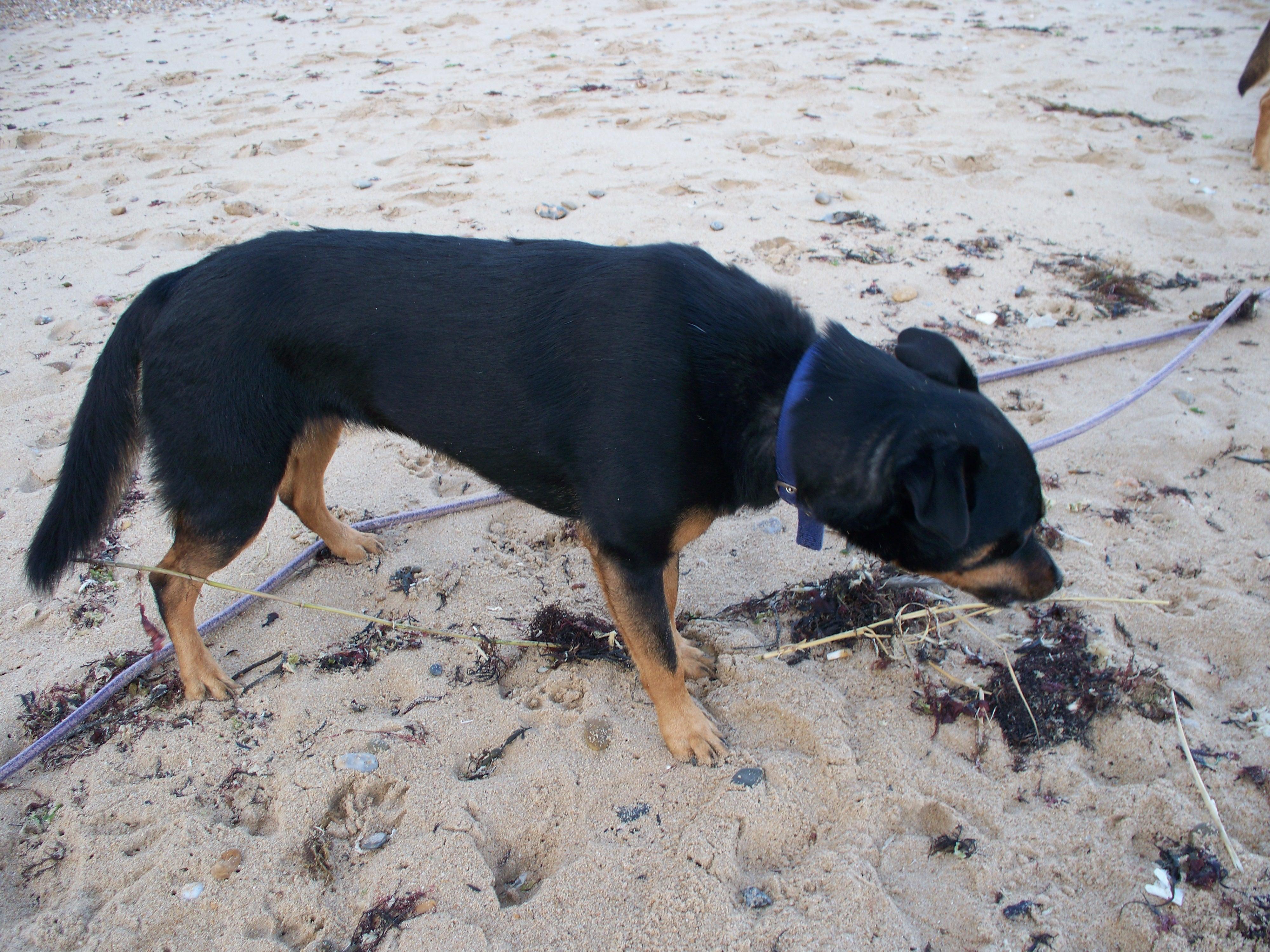 à la découverte de la plage pour Roxy 12080508335415041810180284