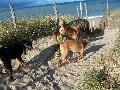 à la découverte de la plage pour Roxy Mini_12080508241215041810180255