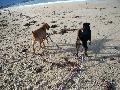 à la découverte de la plage pour Roxy Mini_12080508262715041810180261