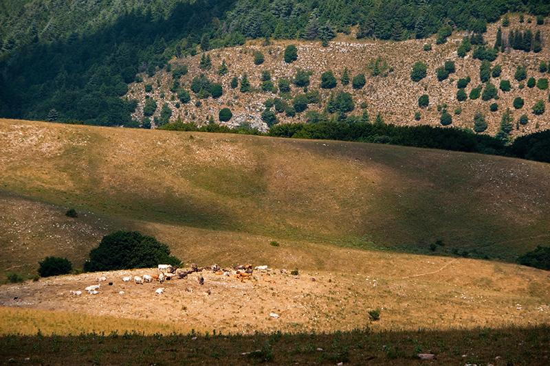 Les pèlerins du Mont Subasio 12081303073914335310204896