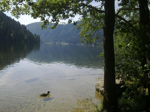 Le lac de Longemer 12081412004811002110209122