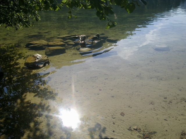 Le lac de Longemer 12081412011311002110209128