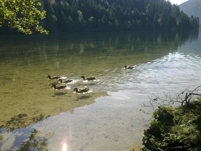 Le lac de Longemer 12081412014111002110209130