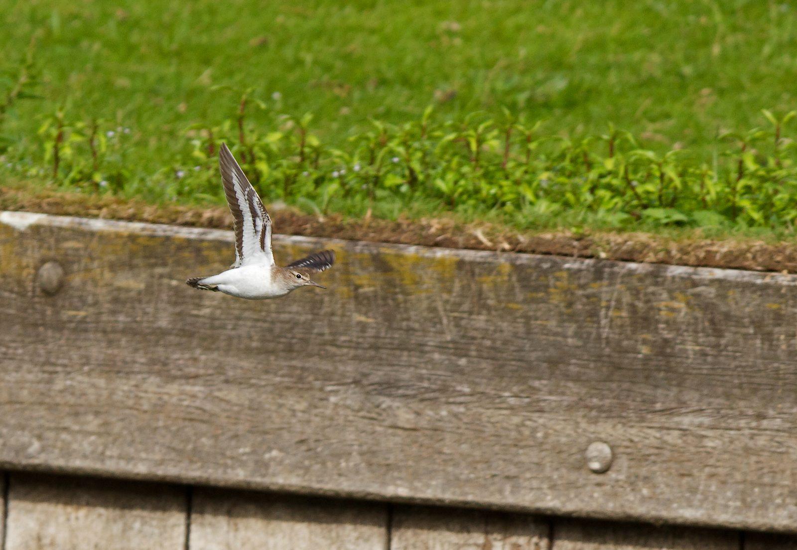 Pêche aux étangs de Tervuren (photos) 1208170417175685110218802