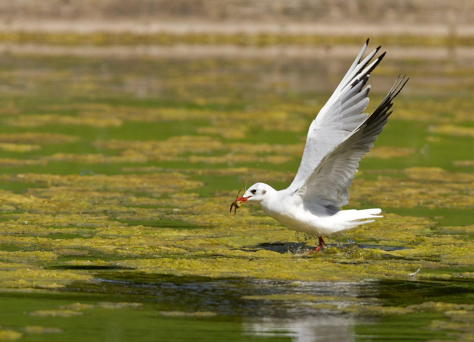 Pêche aux étangs de Tervuren (photos) 1208170417185685110218807