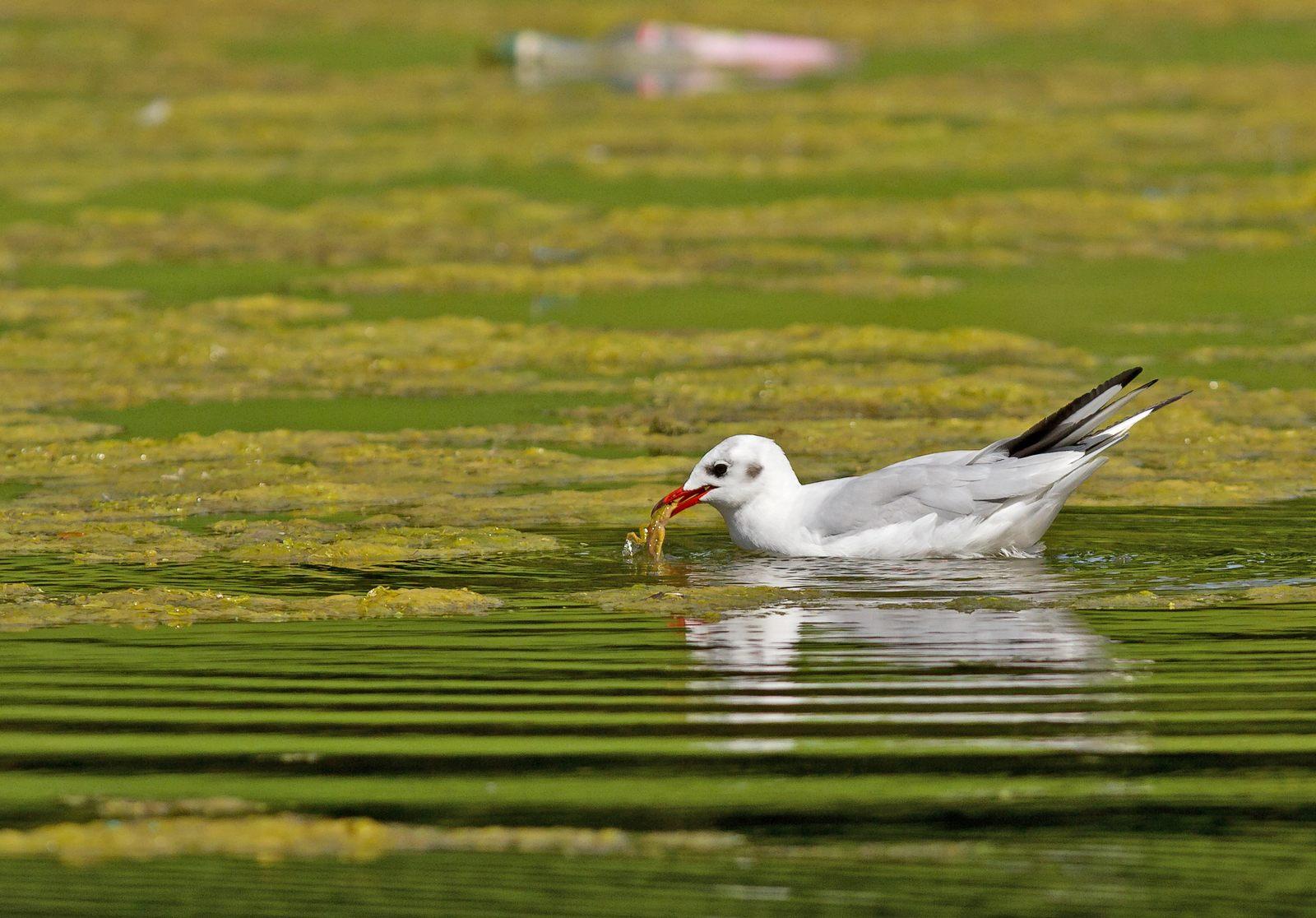 Pêche aux étangs de Tervuren (photos) 1208170417185685110218808
