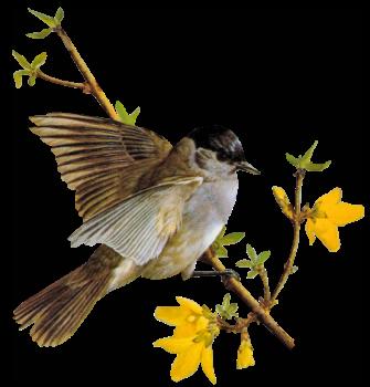 oiseau gauch