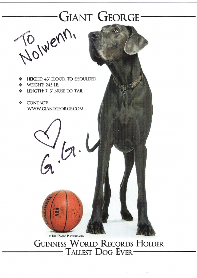 Dédicace de George, le dogue allemand, plus grand chien du monde. dans t) L'ARDECHE MOUN POI 12082103383015299610231147