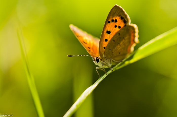 Papillon effect
