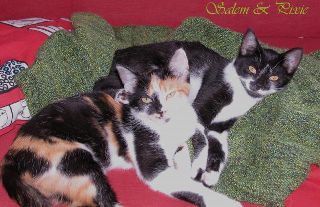 Salem,Pixie et Loush'  12090602500210400510288844