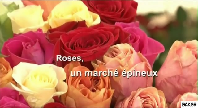 Roses, un marché épineux - 09/09/2012 [TVRIP]