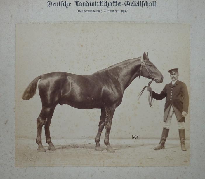 Schwartz - 304b