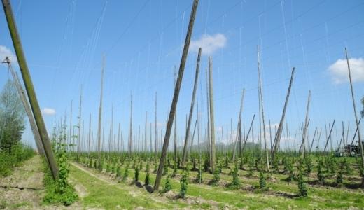 hopvelden, brouwerijen en bieren van Frans-Vlaanderen - Pagina 2 12092606043814196110365496