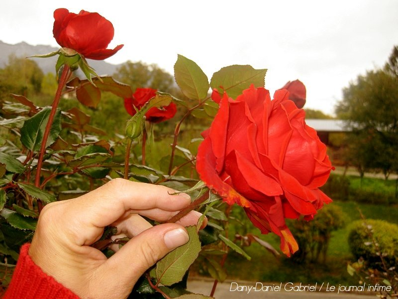 tant quil y aura des roses il y auras de lamour